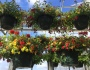 Hanging Baskets for Every Taste!